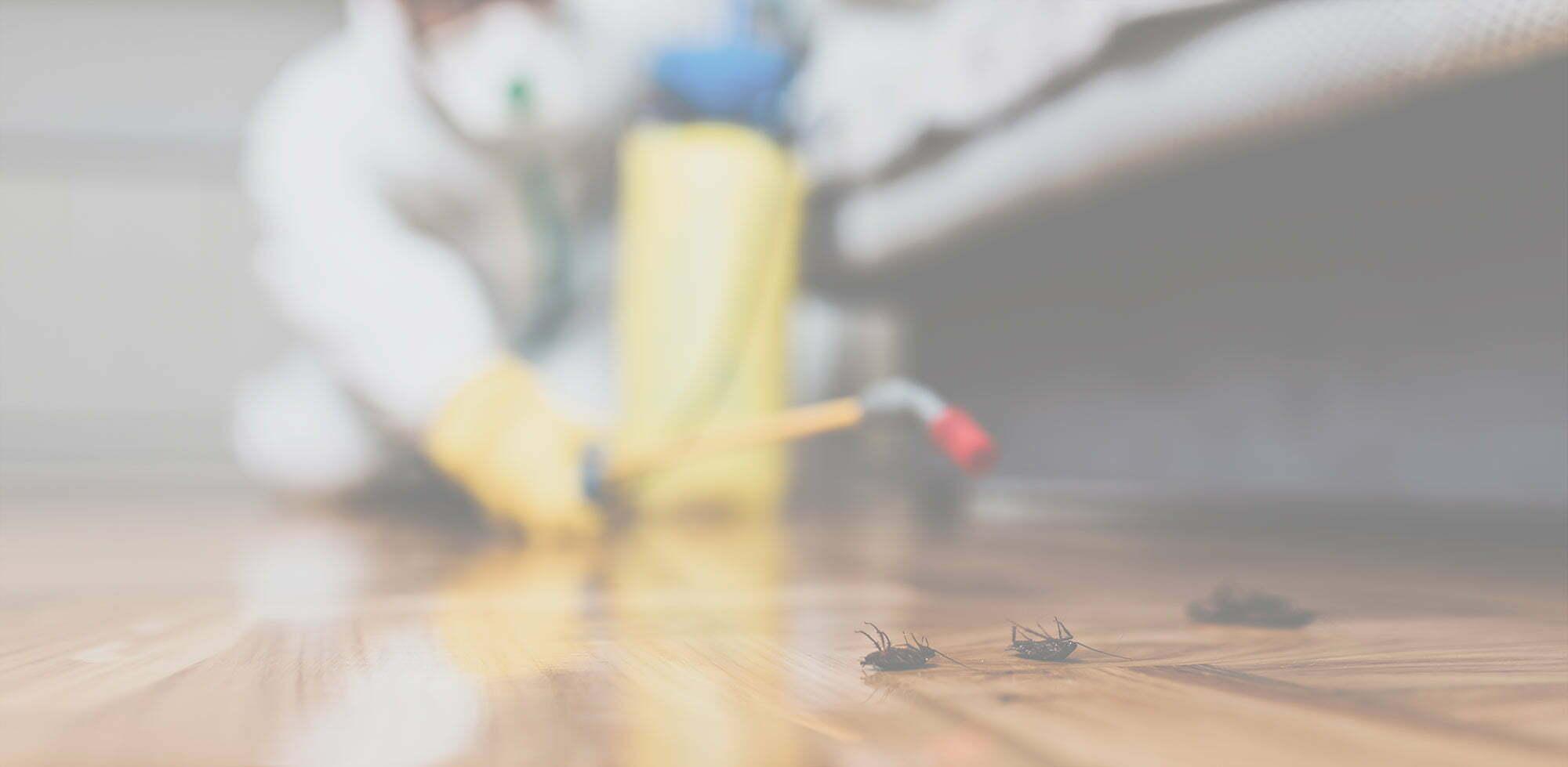Απεντόμωση εντόμων και κατσαρίδων σε σπίτι