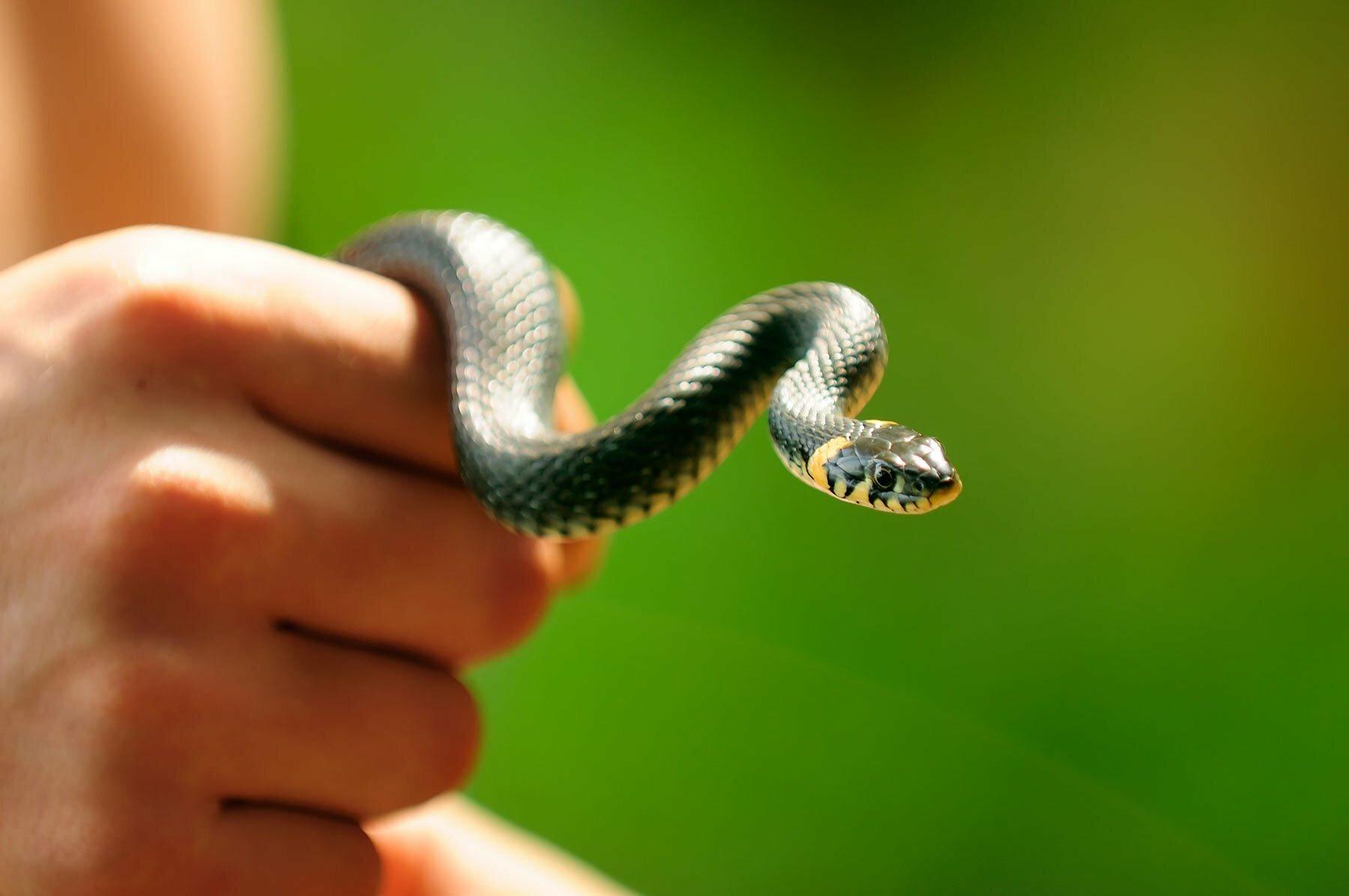Πως διώχνουμε τα φίδια